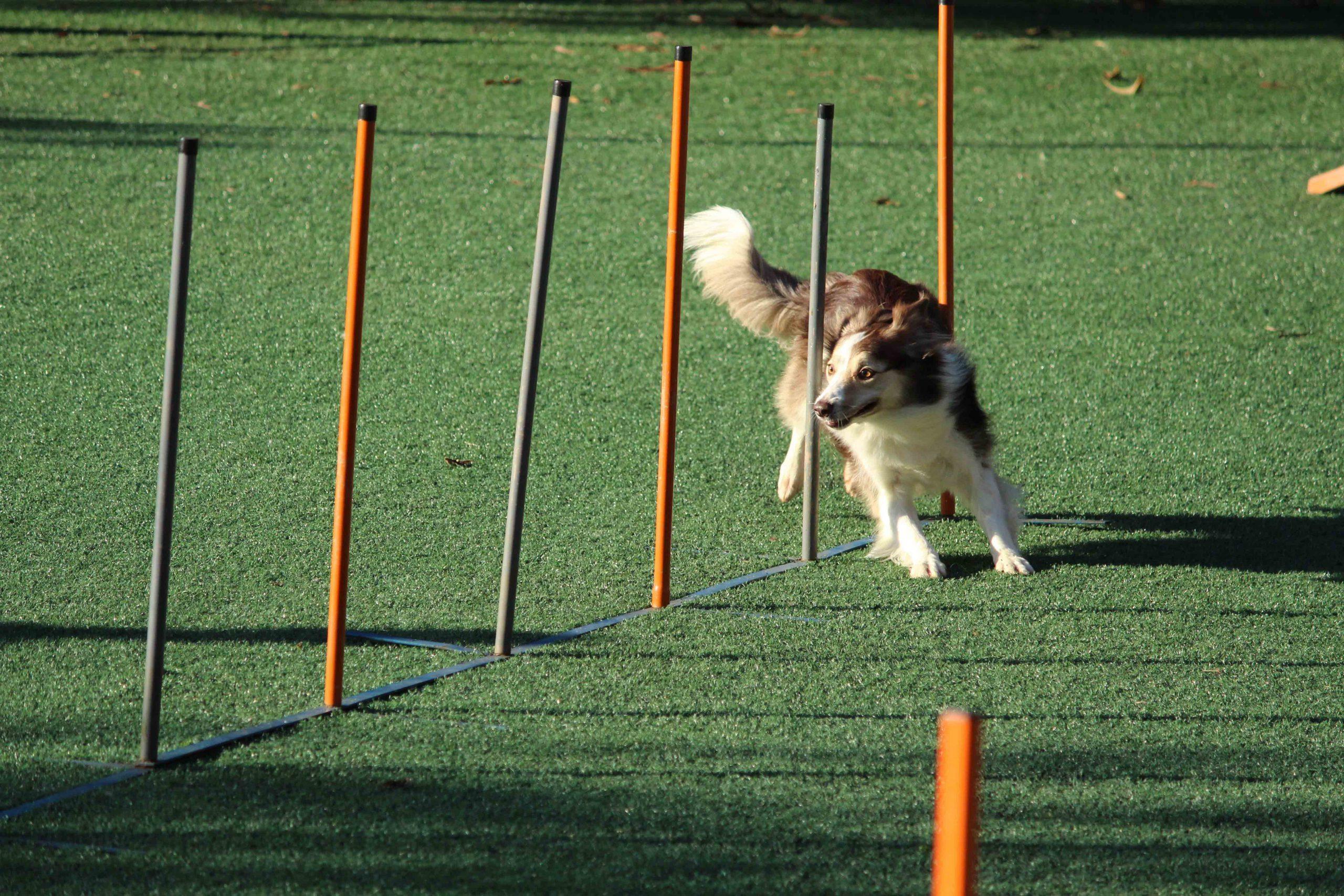 تاثیر ویژگی های رفتاری شما در تربیت سگ ها