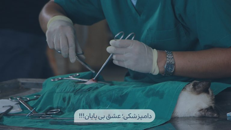 هدر اصلی سایت گروه دامپزشکی ایران