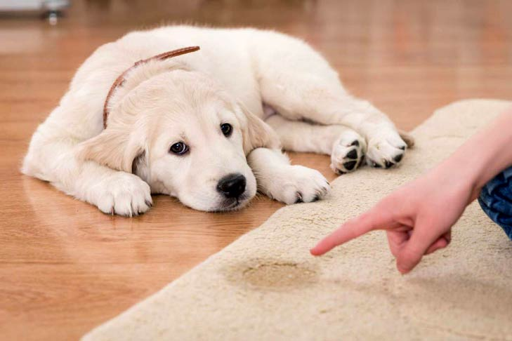 آموزش دستشویی به سگ