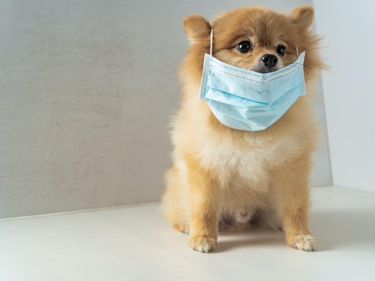 اختلال وسواس فکری عملی در سگ