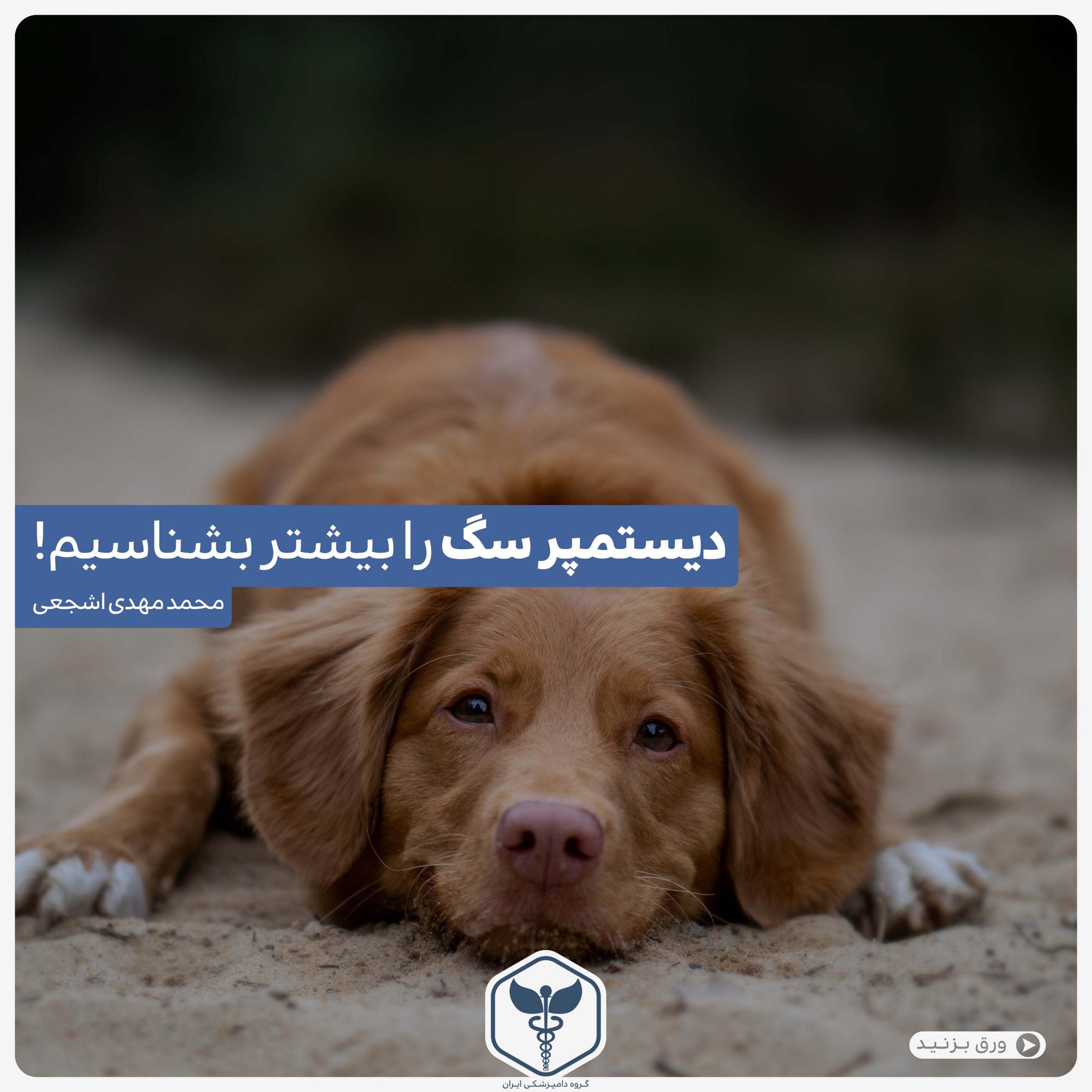 دیستمپر سگ را بیشتر بشناسیم