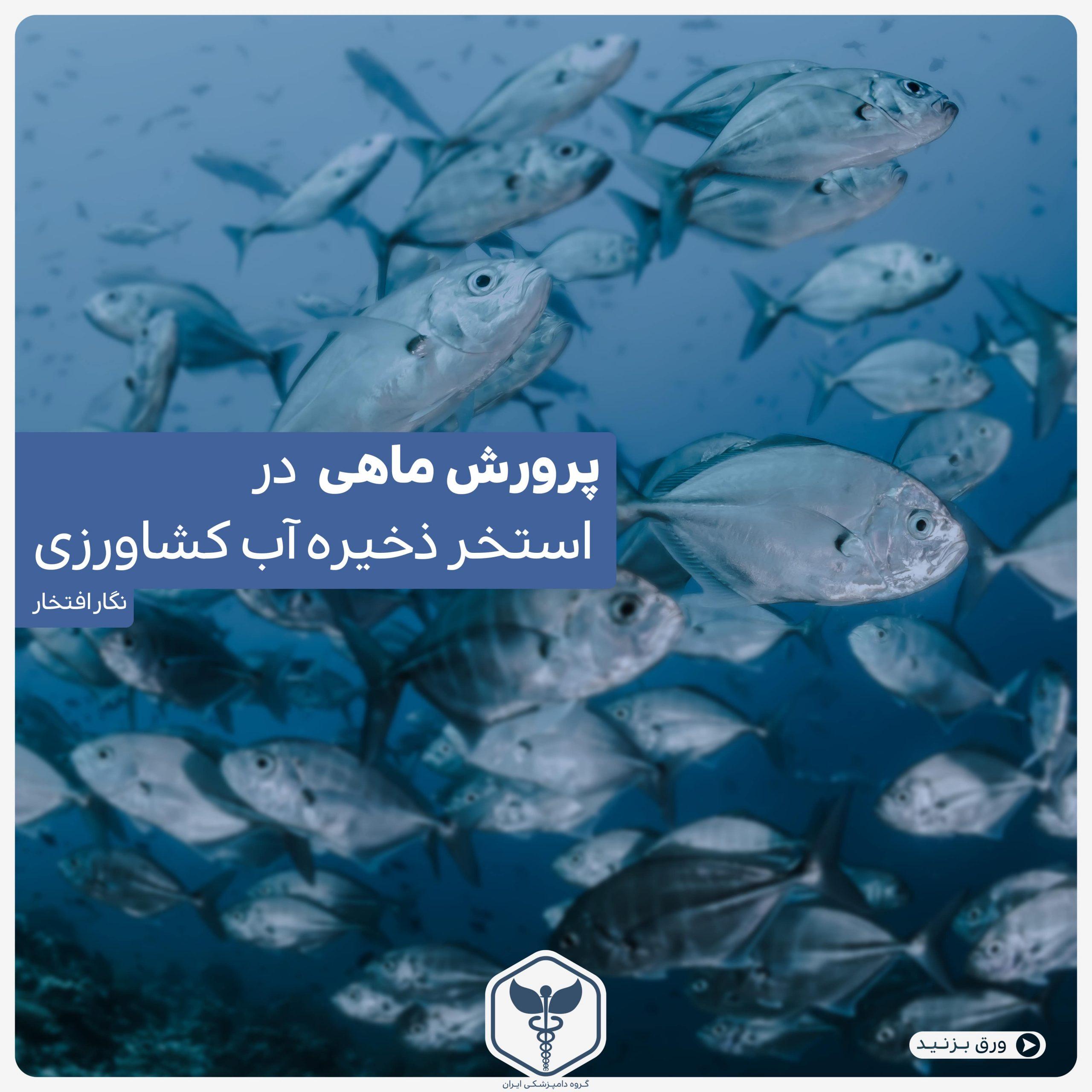 پرورش ماهی در استخر ذخیره آب کشاورزی