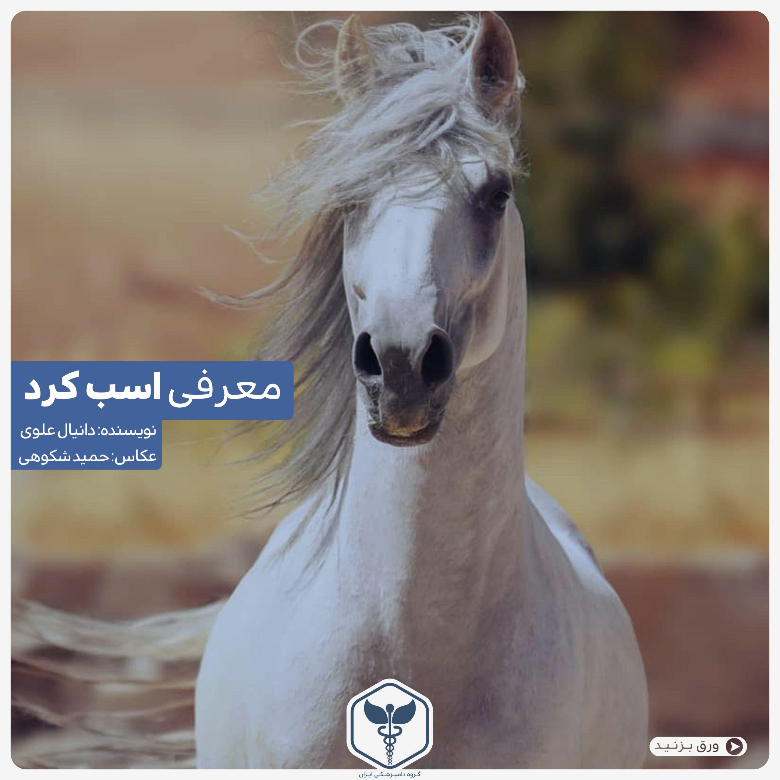 اسب کرد گروه دامپزشکی ایران