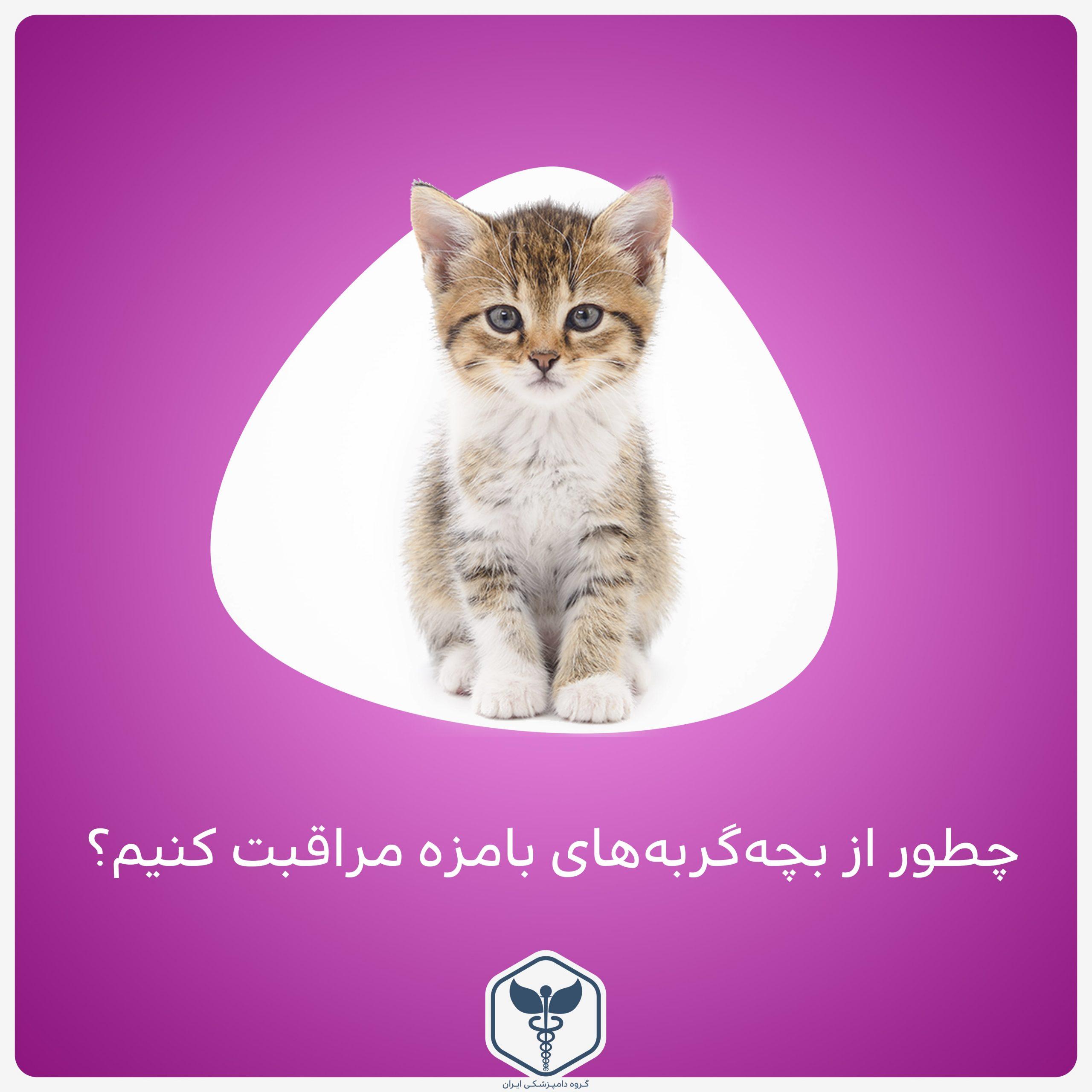 چطور از بچه گربههای بامزه مراقبت کنیم؟!