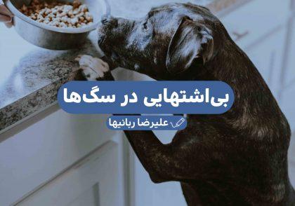 بی اشتهایی در سگها